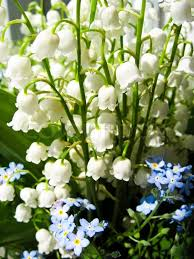of the valley bouquet bouquet of lilies of the valley and blue flowers stock photo