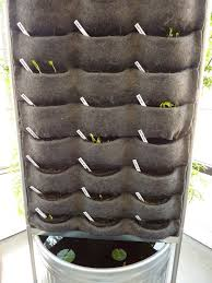 vertical vegetables seeds sprouting u2014 florafelt vertical garden