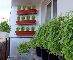 starting a balcony garden 5 steps with pictures