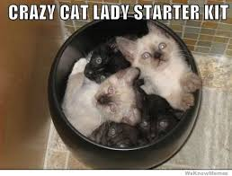 Crazy Cat Lady Memes - crazy cat lady starter kit weknowmemes