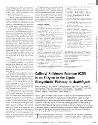caffeoyl shikimate esterase cse is an enzyme in the lignin