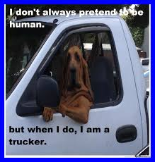 Meme Centar - unbelievable trucker dog by sashad meme center picture of funny