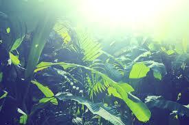 sun kissed jungle leaves mural muralswallpaper co uk