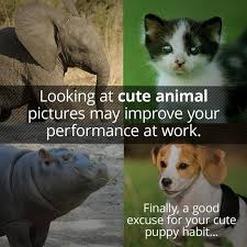 Baby Hippo Meme - want to be more productive at work scroll through cute animal