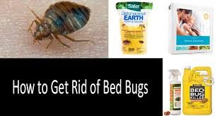 Harris Bed Bug Killer Reviews How To Get Rid Of Bed Bugs Fast 8 Best Bed Bug Traps Sprays And
