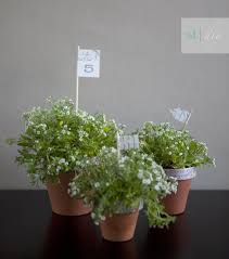 Potted Plants Wedding Centerpieces by Best 25 Flower Pot Centerpiece Ideas On Pinterest Edible