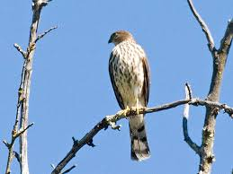 Nevada birds images Birds jpg
