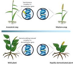 plants native to egypt more crop variety researchers propose using crispr to accelerate