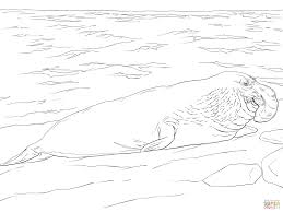 free coloring pages elephant seal kids coloring