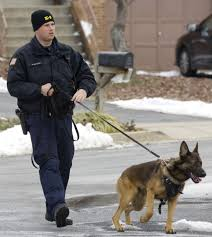 belgian malinois in movies frederick police mourns death of k 9 officer bady a german