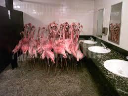 Pink Flamingo Bathroom Accessories by Flamingos In The Men U0027s Room How Zoos And Aquariums Handle