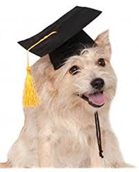 dog graduation cap and gown graduation hat for dogs and cats medium 12 15