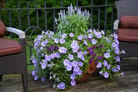 balkon grã npflanzen winterharte balkonpflanzen pflanzarten und pflege tipps