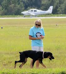 an airlift brings in 40 dogs for new lives in florida