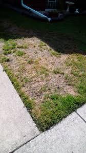 3 ways to treat lawn fungus wikihow