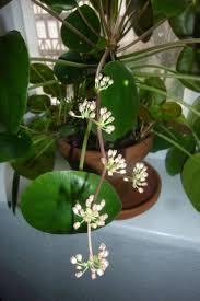 289 best indoor gardening images on pinterest gardening flowers