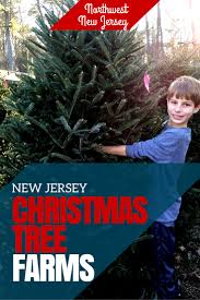 christmas trees new jersey christmas lights decoration