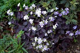Low Maintenance Plants And Flowers - 6 low maintenance impossible to kill plants to make your home