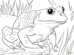 coloring pages of frogs glum me