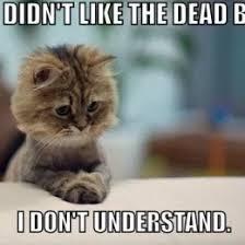 Kittens Memes - adorable kittens meme meme rewards