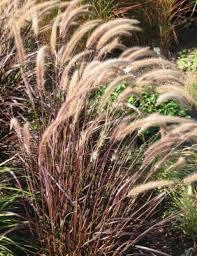 lazy gardener when grass adds class houston chronicle
