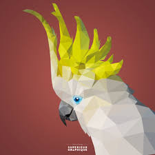cartoon cockatiel hand drawn polygon vector birds by superieur graphique u2013 sulphur