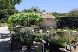 san diego native plant nursery timeless environments tree of life nursery