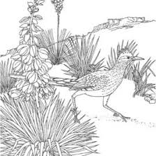 Joshua Tree Coloring Page Kids Drawing And Coloring Pages Marisa Sw Coloring Page