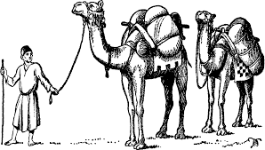 camels clipart drawn pencil and in color camels clipart drawn