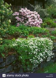 Garden Rock Wall by A Spring Garden With Candytuft Cascading Over A Rock Wall With