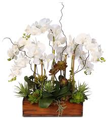 Artificial Orchids Phalaenopsis Silk Orchids With Succulents In Dark Wooden