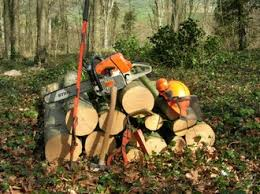 woodworks wight wood directory dryad treework