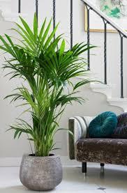best 25 kentia palm ideas on pinterest green plants palm