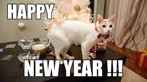Happy New Year Cat Meme - chapy cat wishes you happy new year youtube