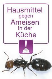 ameisen k che beautiful hausmittel gegen ameisen in der küche contemporary