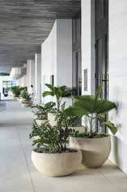 Modern Balcony Planters by 1450 Best Container And Planters Images On Pinterest Garden
