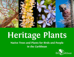 native plants of spain resources u2013 birdscaribbean