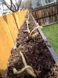best 25 gutter garden ideas on pinterest hydroponic