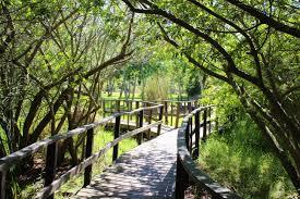 free images tree nature trail bridge leaf flower river