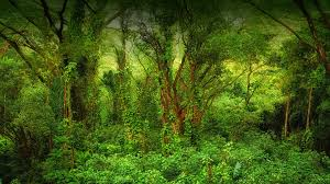 native plants in the tropical rainforest habitats san diego zoo animals u0026 plants
