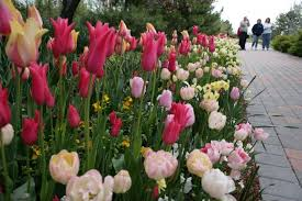 thanksgiving point tulip festival 2 coupon utah sweet savings