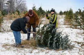 Cutting Christmas Tree - cutting christmas tree pictures images and stock photos istock