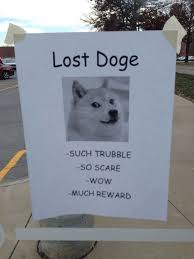 Lost Doge Meme - lost doge funny and fun pinterest doge memes and humor