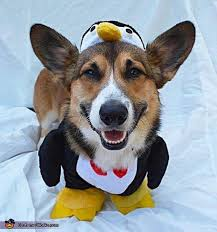 Penguin Costume Halloween 268 Costume Ideas Pets Images Costume
