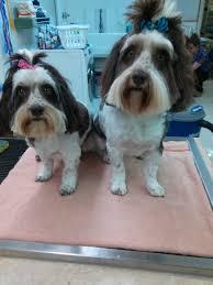 arkansas browning animal clinic veterinarian in arlington tx