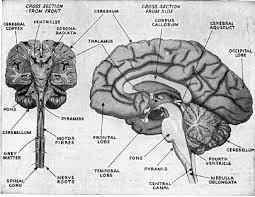 Anatomy And Physiology Glossary 45 Best Anatomy And Physiology Images On Pinterest Anatomy And