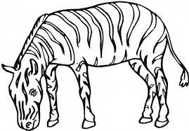 plains zebra coloring download u0026 print coloring