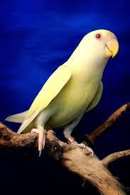 24 best birds images on pinterest pet birds beautiful birds and