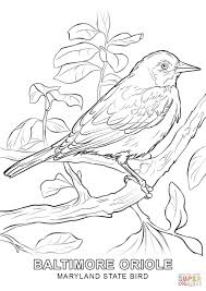 maryland state bird coloring page free printable coloring pages