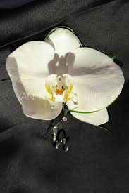37 best orchid boutonnieres images on pinterest orchid